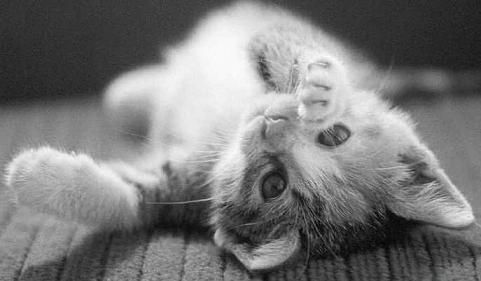 Kiero mi gatito!!!